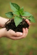 School Garden Hands and Plant-small