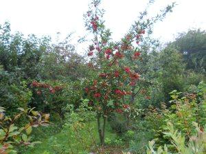 permaorchard