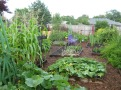 growing-fruits-and-vegetables-on-garden-how-to-start-a-vegetable-garden1