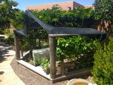 annies covered veg garden