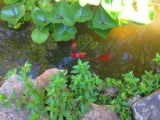 reese baker pond